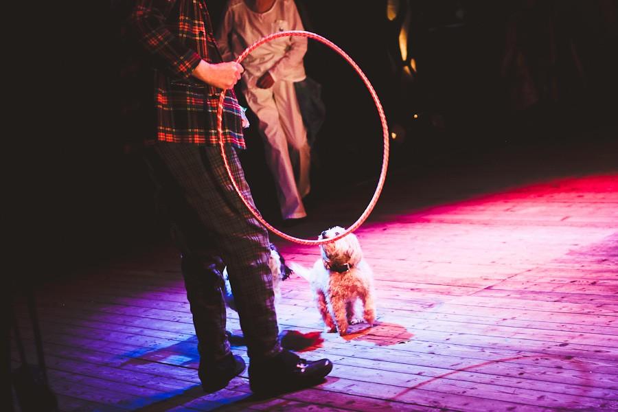 senior-circus-5