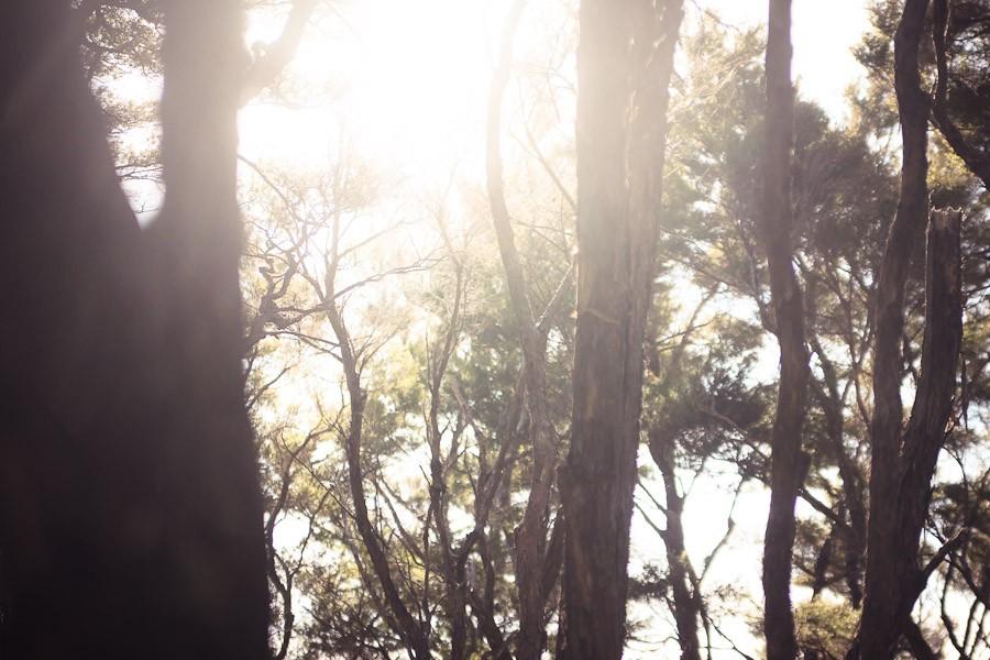 nz-abel-tasman-14