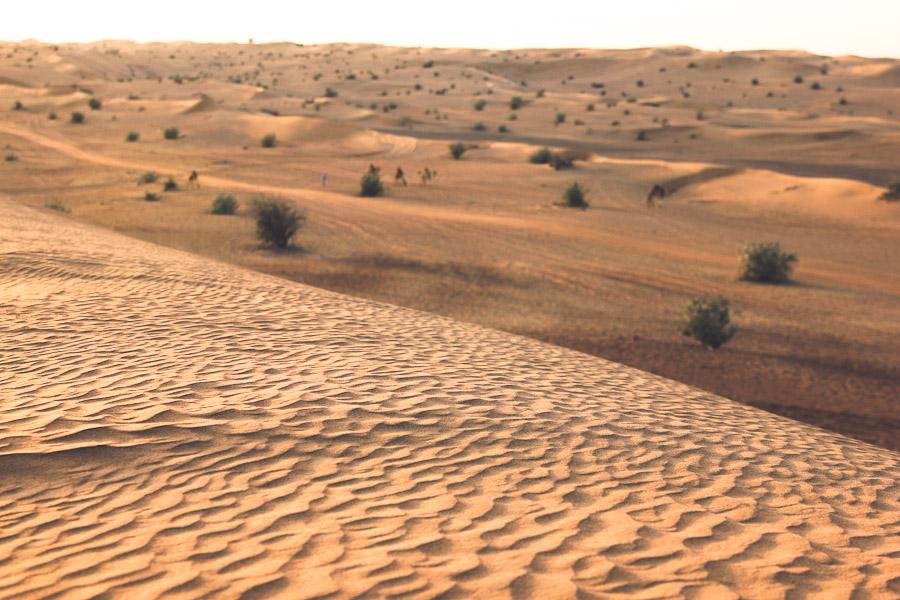 dubai-desert-03